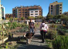 15 nuevas huertas comunitarias para el vecindario